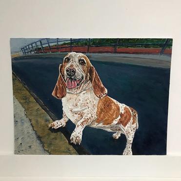 Honey the basset hound.