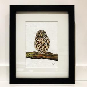 """Little owl. Oil on canvas board 5x7"""""""