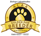 Bolingo GOLDEN PAW 2021.png