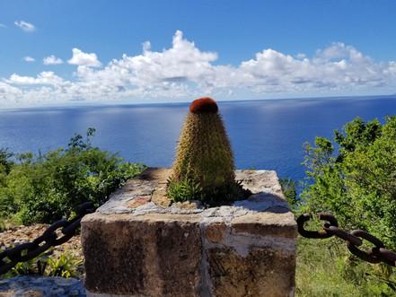 Amazing view of the Ocean