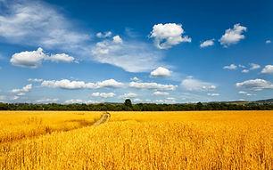 Agricultural_land_Ukraine_1.jpg