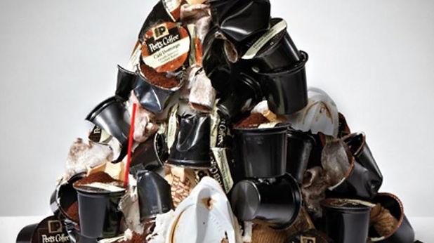 crushed pods.JPG