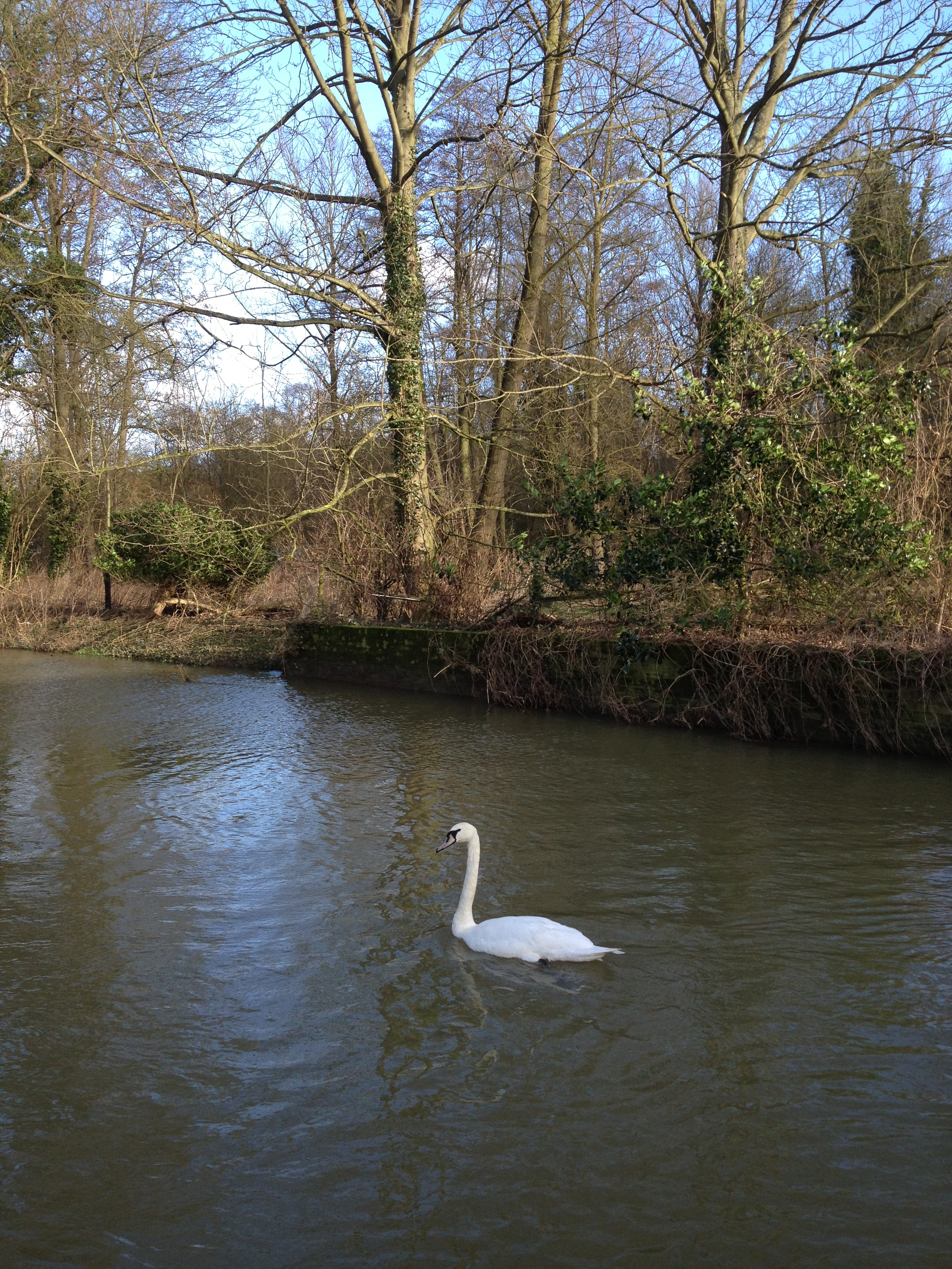 Wildlife at Kersey Mill