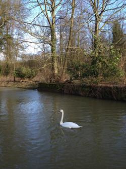 Wildlife at Kersey Mill