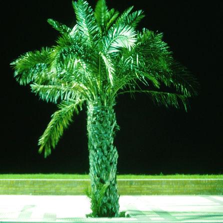 Palme_Nacht.jpg