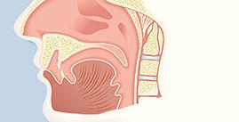 human sinus cavity