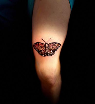 Butterfly_edited.jpg