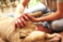 Auckland Canine Massage