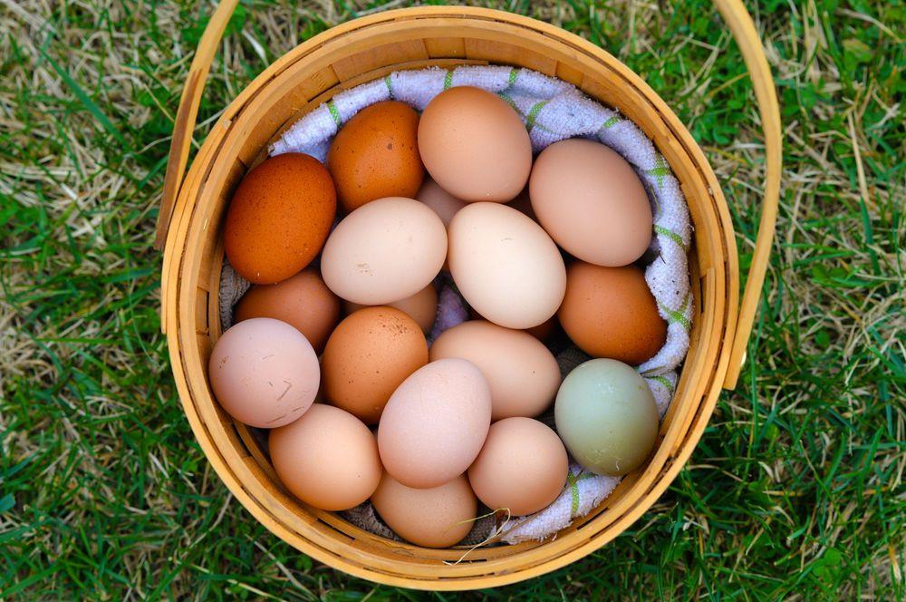 Na Páscoa, ovos representam nova vida.