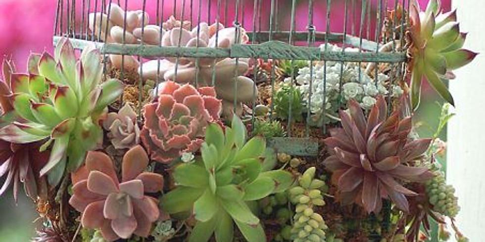 Succulent and Indoor Begonia Show