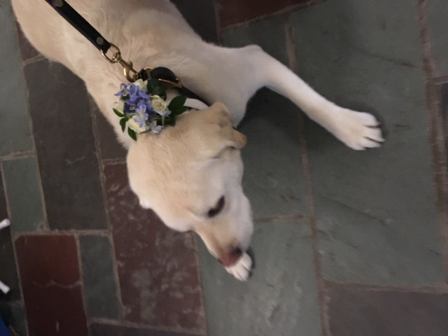 dog corsage