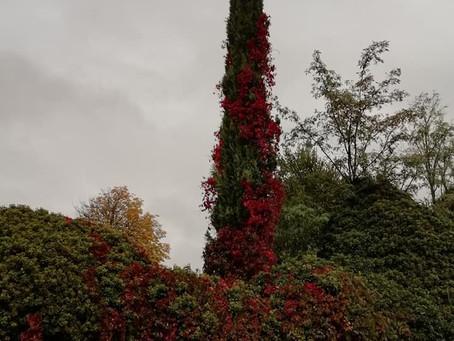 Nos encanta el otoño!