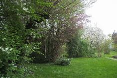 S16_Bild_Garten.png