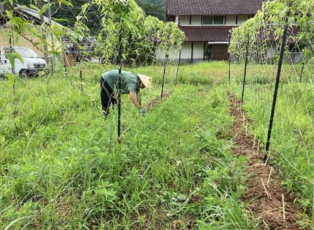 【ゆにわ農園】梅雨時期の草取り