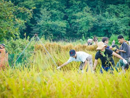 ゆにわのスタッフ大集合!秋の収穫祭