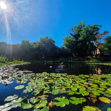 Relais & Chateaux Taubenkobel und ein Sommerwochenende in Wien