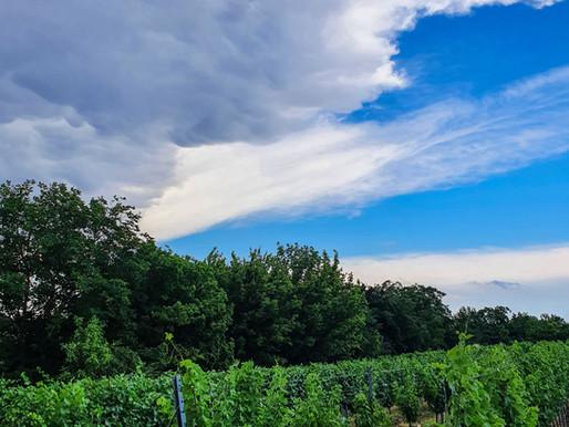 Besuch am Weingut Strehn, Deutschkreutz 09.07.21