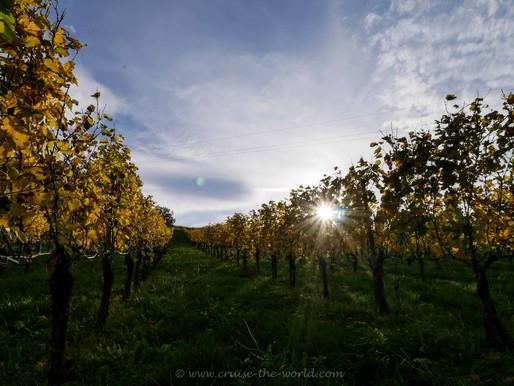 Die Südsteirische Weinstraße im Oktober