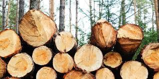 EPA speaks against illicit tree harvesting