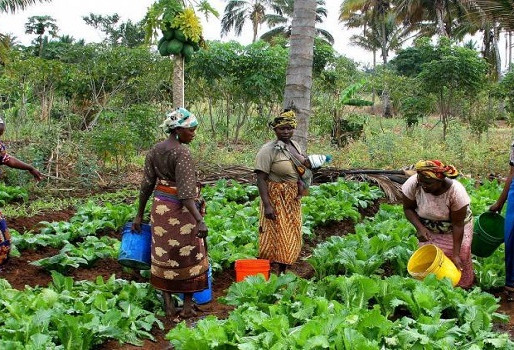 Farmers Group in Ghana Appeal for Stimulus Package for Smallholder Farmers
