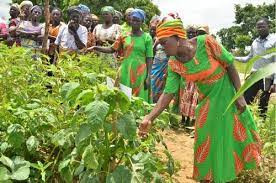 Form farmer groups for easy access to government, organizations support – Agric Extension Agent