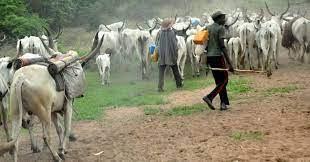 Farmers at Kpalworgu accuse nomadic Fulani herdsmen of thwarting farming activities