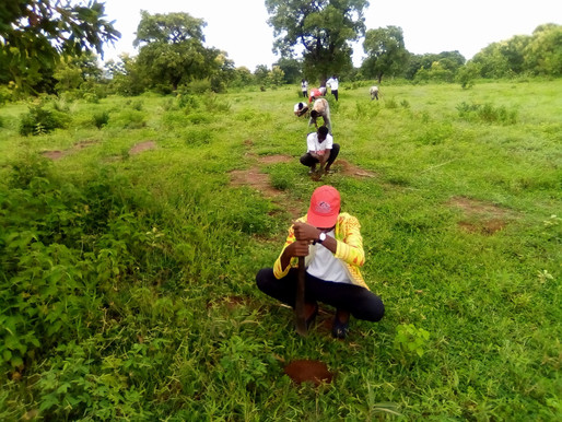 Northern Development Authority supports youth tree planting exercise
