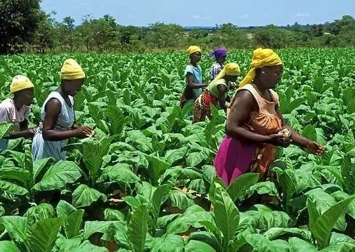 FAO Calls For The Empowerment of Women Small-Holder  Farmers to Improve Food Production
