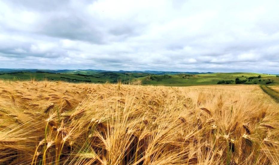 Fertilizarea la cultura grâului de toamnă