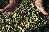 olive-nuova1.jpg