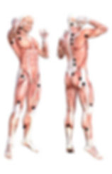 Myofascial Release Points.JPG