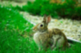 Bunnies_JessicaJasso.jpeg