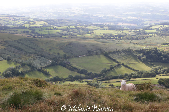 View from Offa's Dyke 8