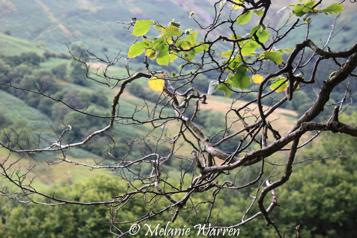 Branch and Mountain 2