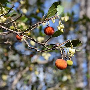 Biotope La Forêt de pins