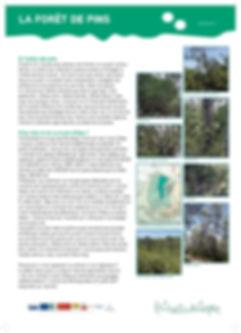 DQOSM_Draille_PanneauxBIO_forêt.jpg