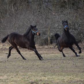 Flyttar hästar!