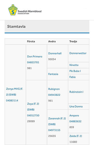 Stam Zonya