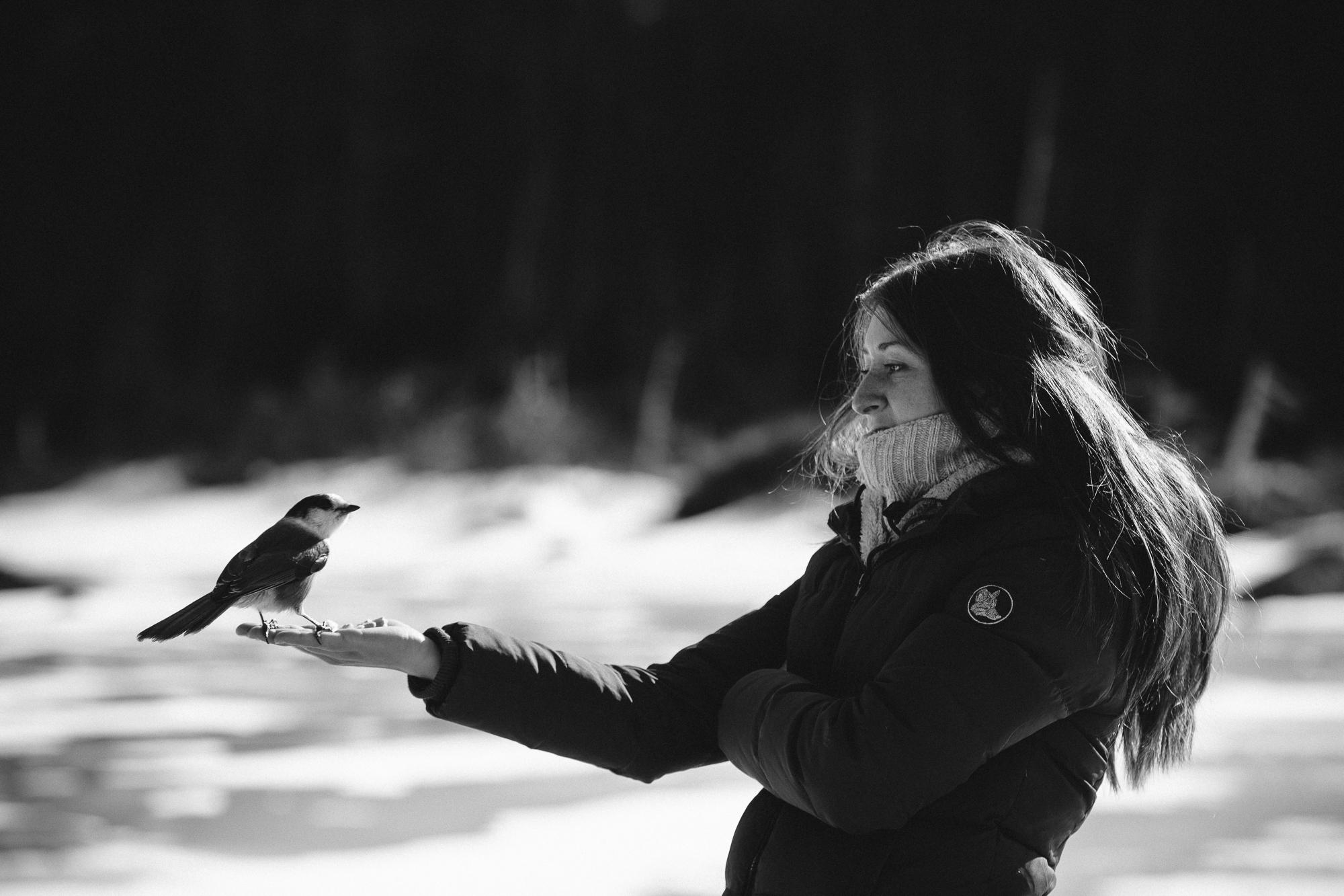 Nature forêt Canada portrait oiseau