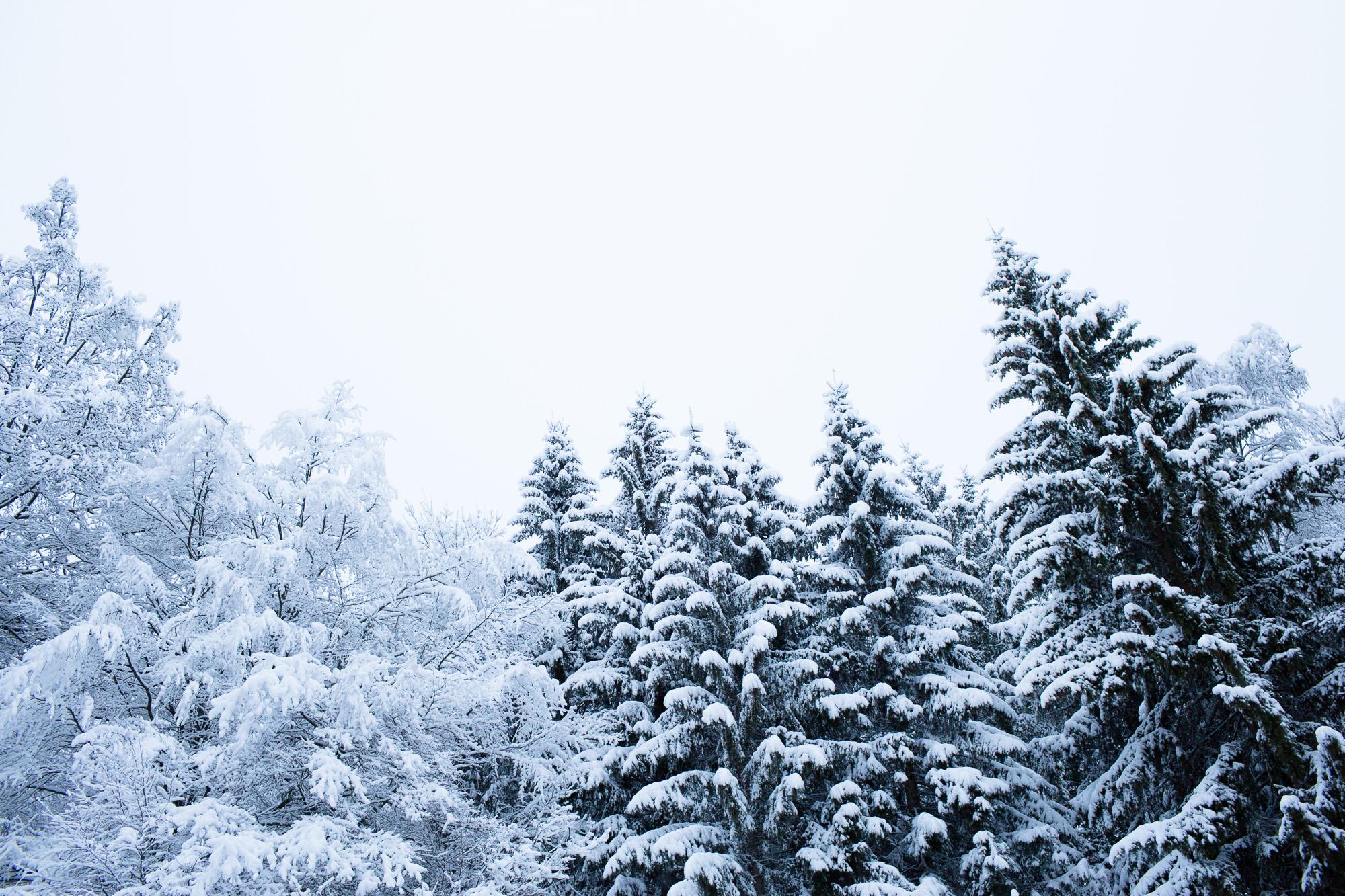 Nature forêt Montagne Haute-Savoie