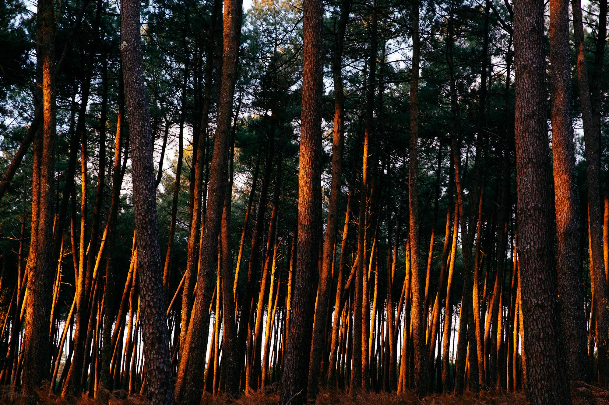 Nature forêt landes