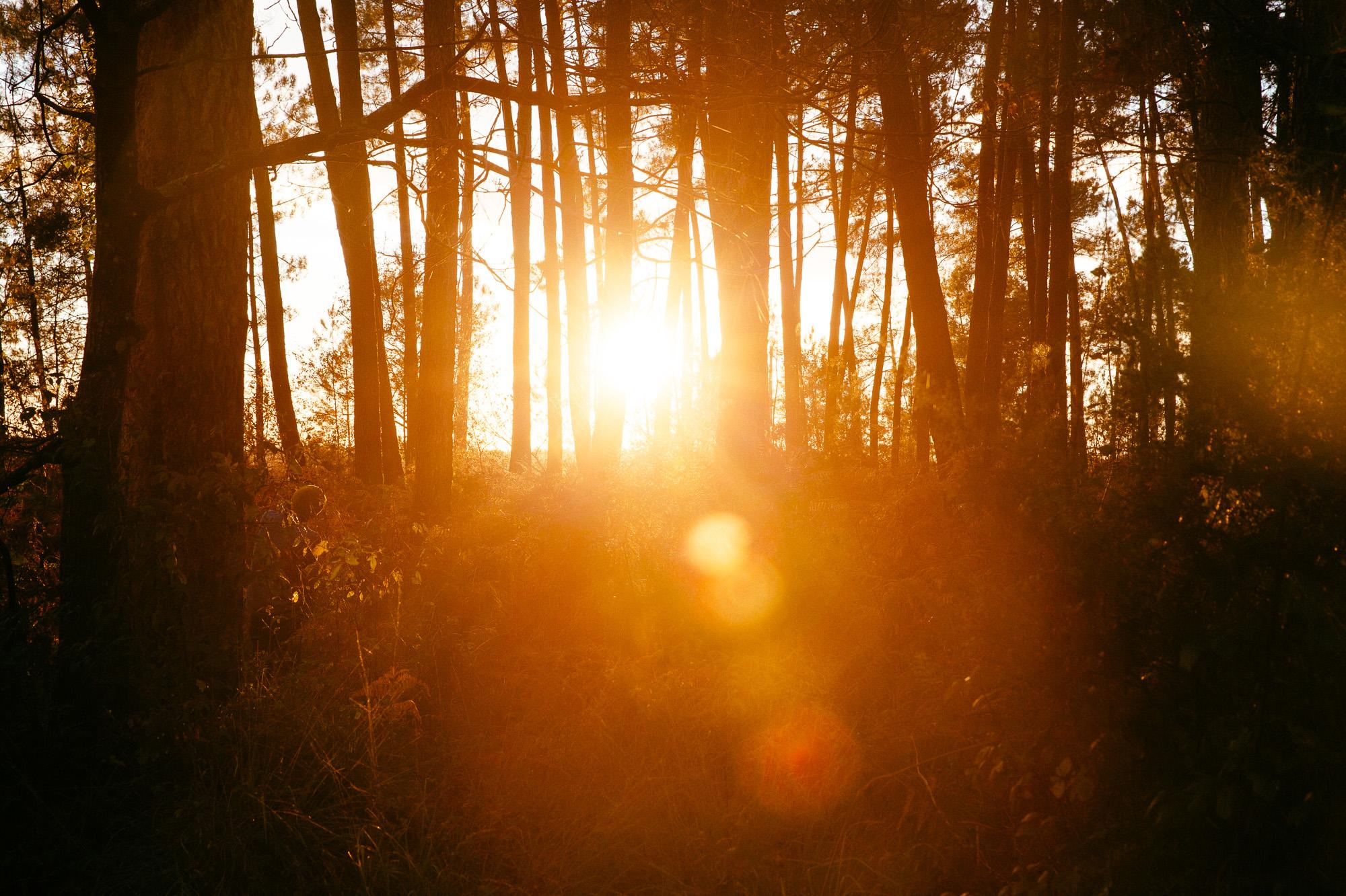 Nature forêt sunset