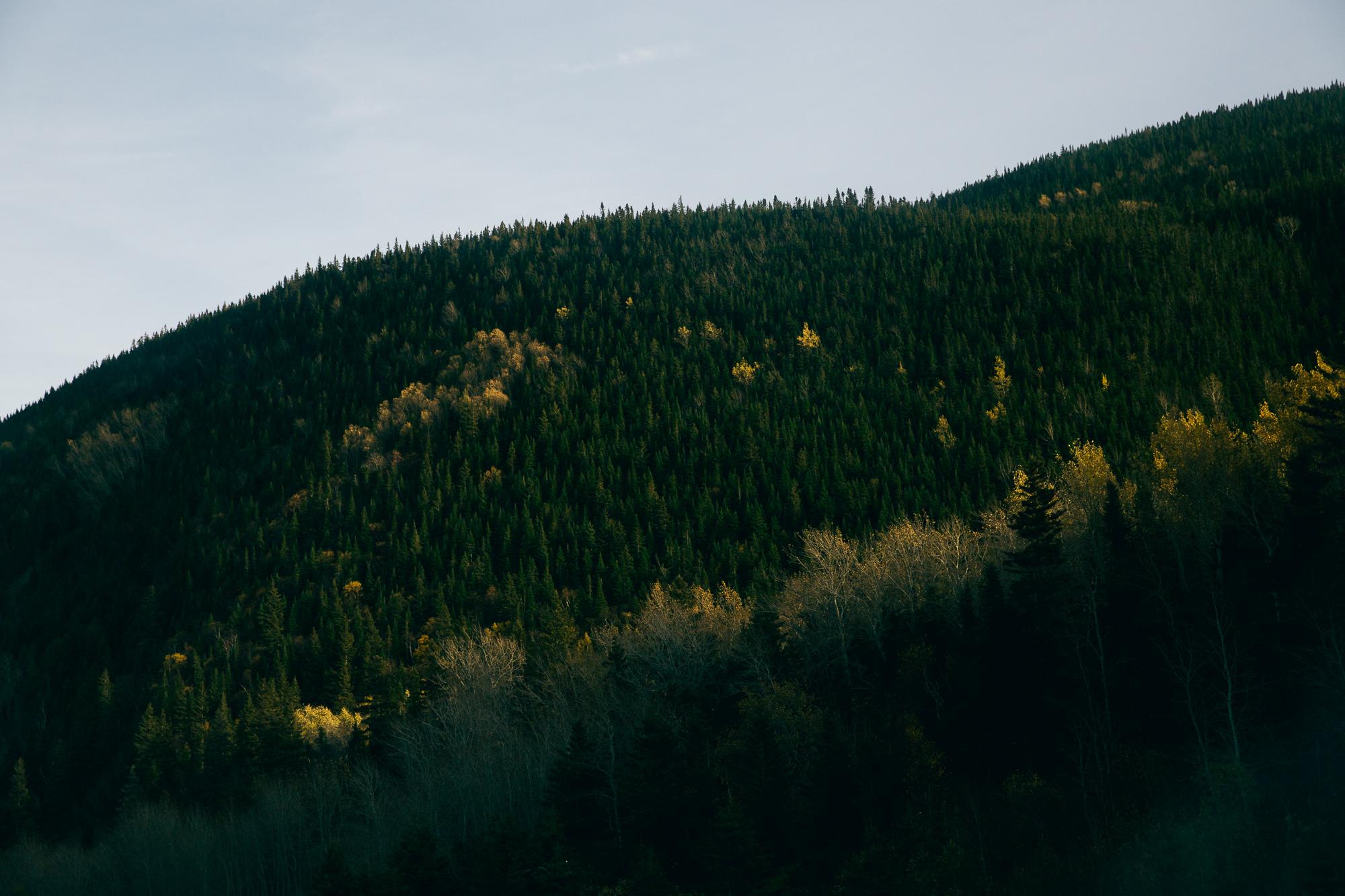 Nature forêt Canada Montagne