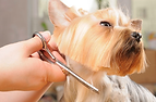 dog daycare boarding pet grooming pet sitting