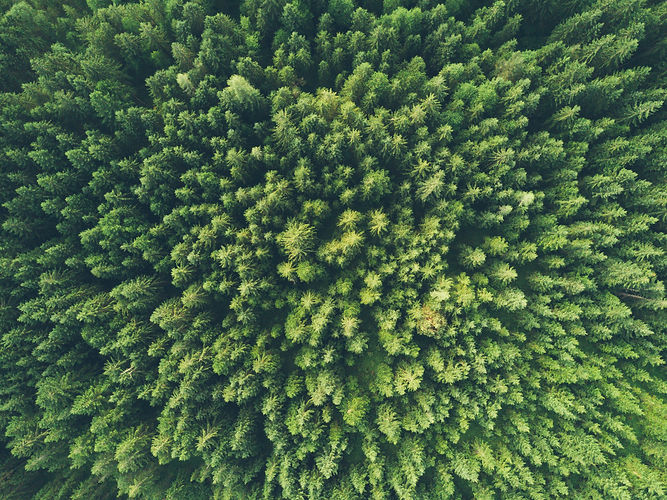 Green Forest Drone Shot - Osinto Low Car