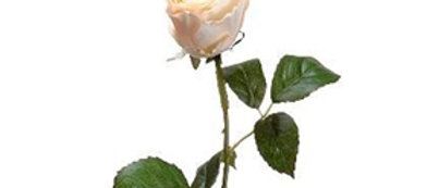 ROSA BEIGE 56CM