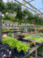greenhouse flowers and hanging baskets