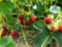 berries closeup.jpg