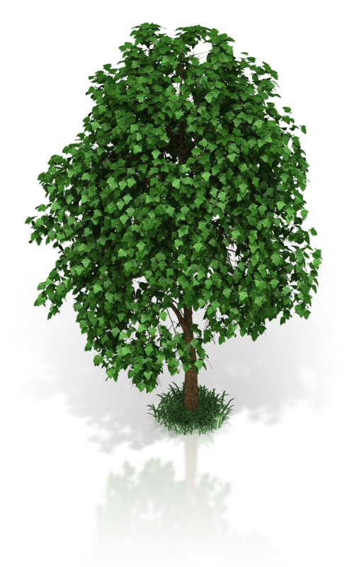 small_tree_800_clr_17415.png