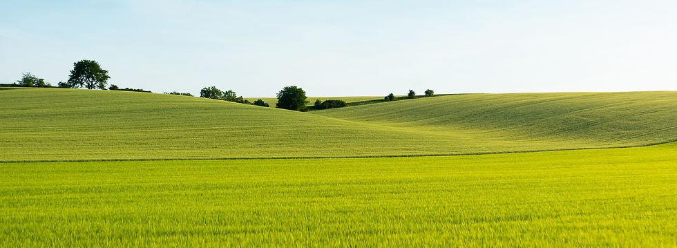 beautiful-green-wheat-field-picjumbo-com
